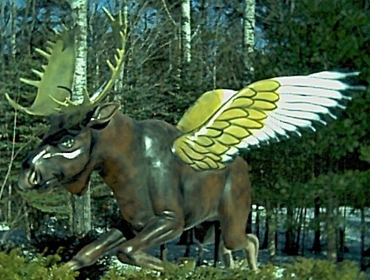 Rare flying moose. raised on Miracle Grow